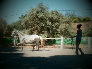 Advanced horse riding lessons in Andalucia