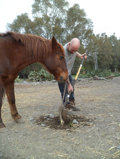Learn about horses in spain