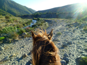 Enjoy a horse trek through Adalucia